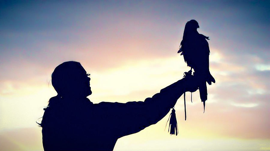 Falconry Sunset Falconer Harris Hawk