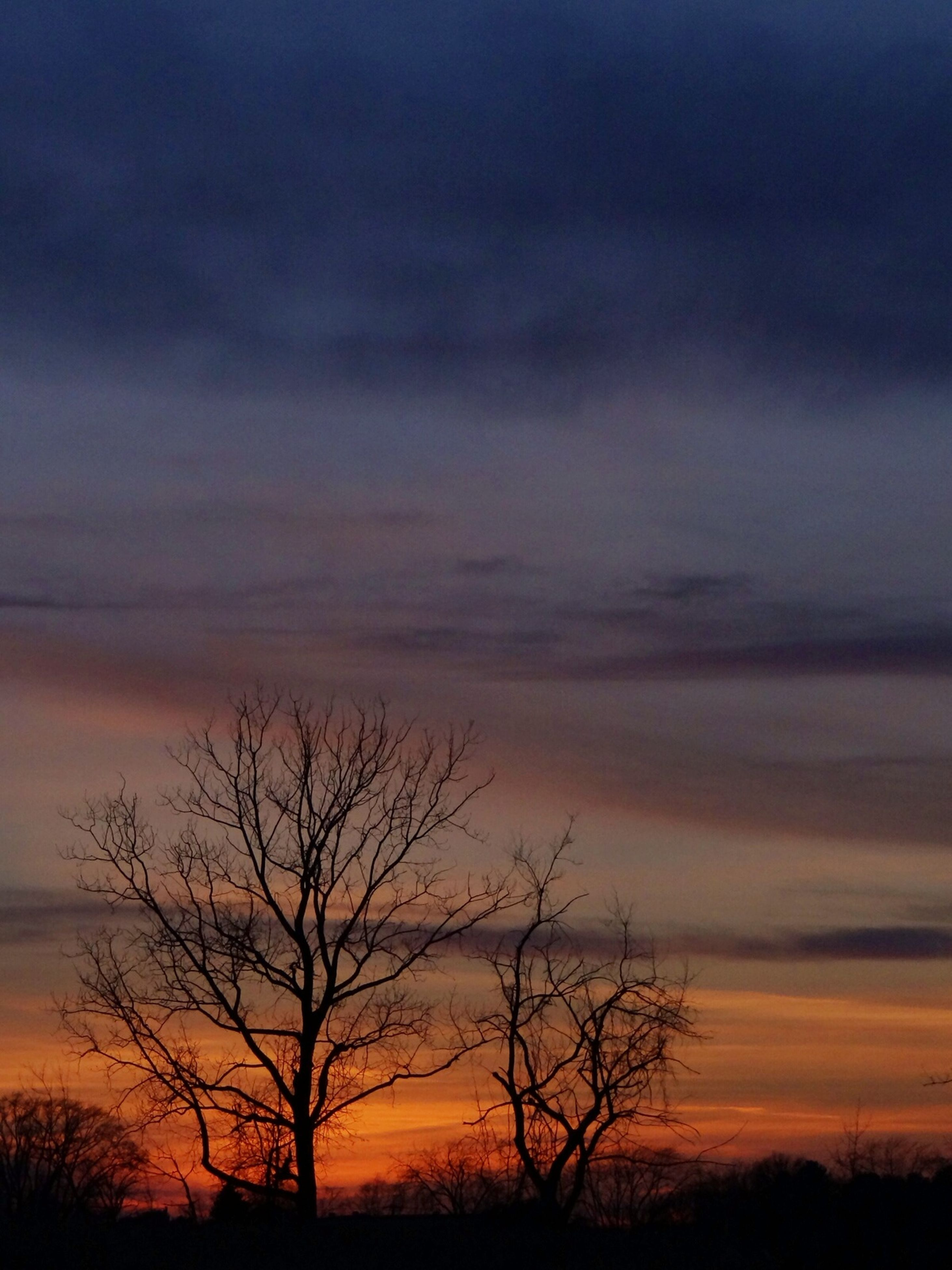 silhouette, sunset, bare tree, sky, tranquility, scenics, beauty in nature, tree, tranquil scene, branch, orange color, cloud - sky, nature, low angle view, dramatic sky, idyllic, cloud, majestic, outdoors, dusk