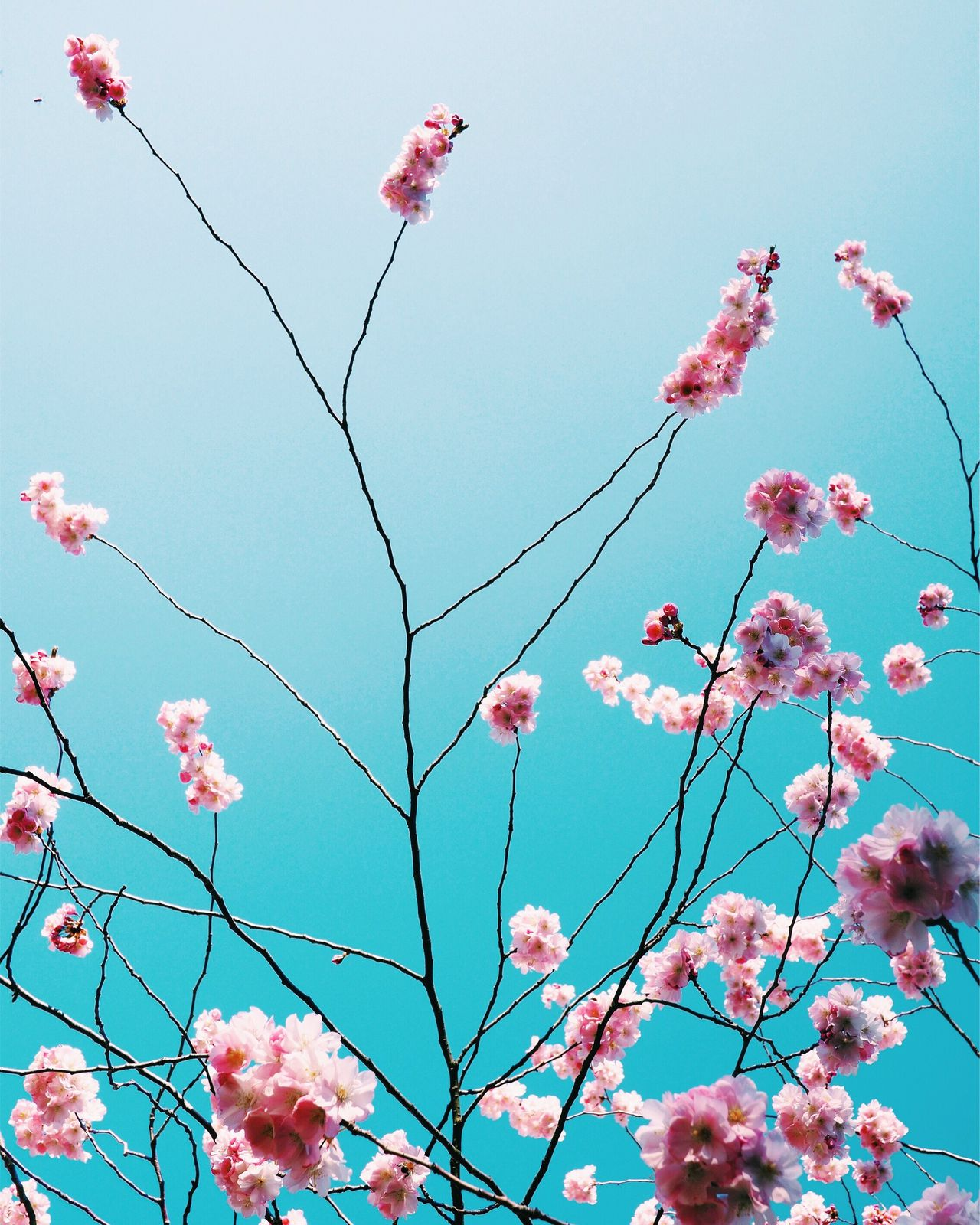 Flower Low Angle View Pink Color Nature Growth Beauty In Nature Sky Fragility Freshness Springtime Day Outdoors Branch Blooming Tree Close-up Magnolia