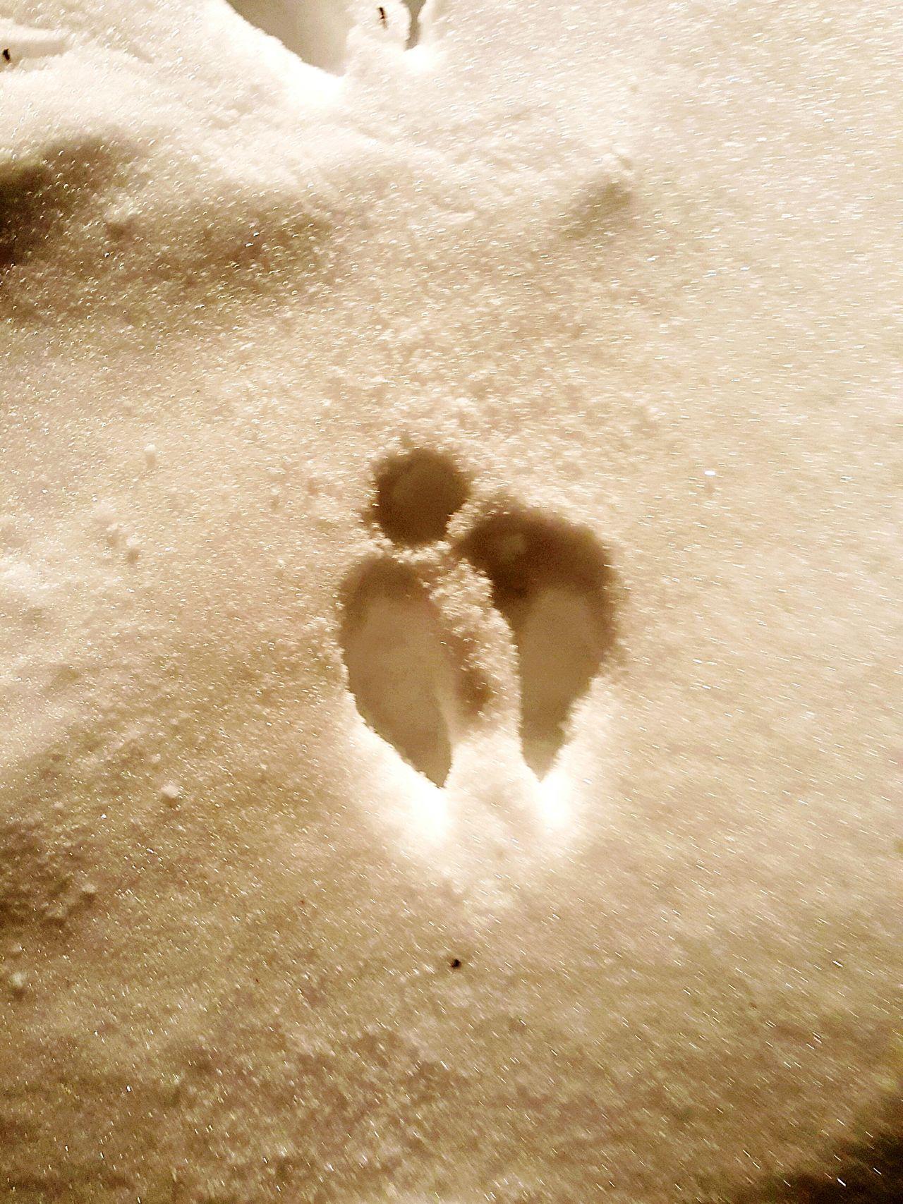 Blizzard 2016 Animal Prints Deer Tracks Snowscape Winter Snow ❄