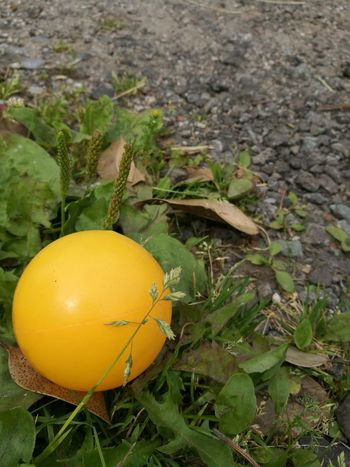 Found Object Surreal Ball Yellow Plastic Round Sphere Abandoned Abandoned Toy No People Off Center Off Centre