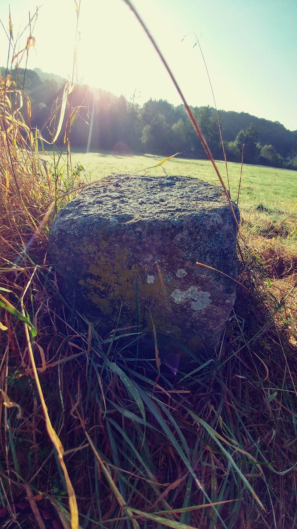 Grass Trawa Nature Natura Stones Kamienie Smartphone Photography Smartphonephotography Lgg5photography LG  Lg G5