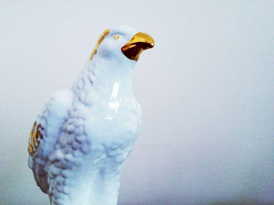 White & Gold Eagle Eagle Eagle Portrait Eaglephotography Valton White White Background White Wall Gold Golden Eagle