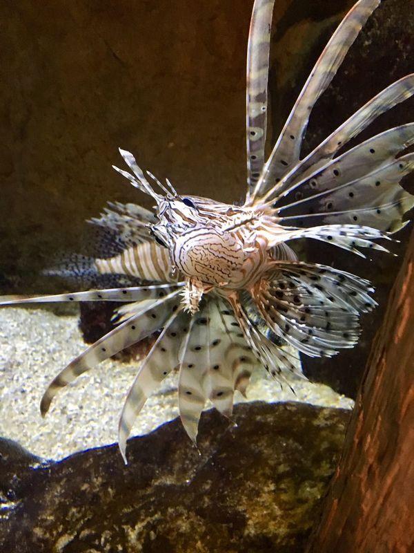 Animal Themes Animals In The Wild One Animal Fich красота рыба океанариум