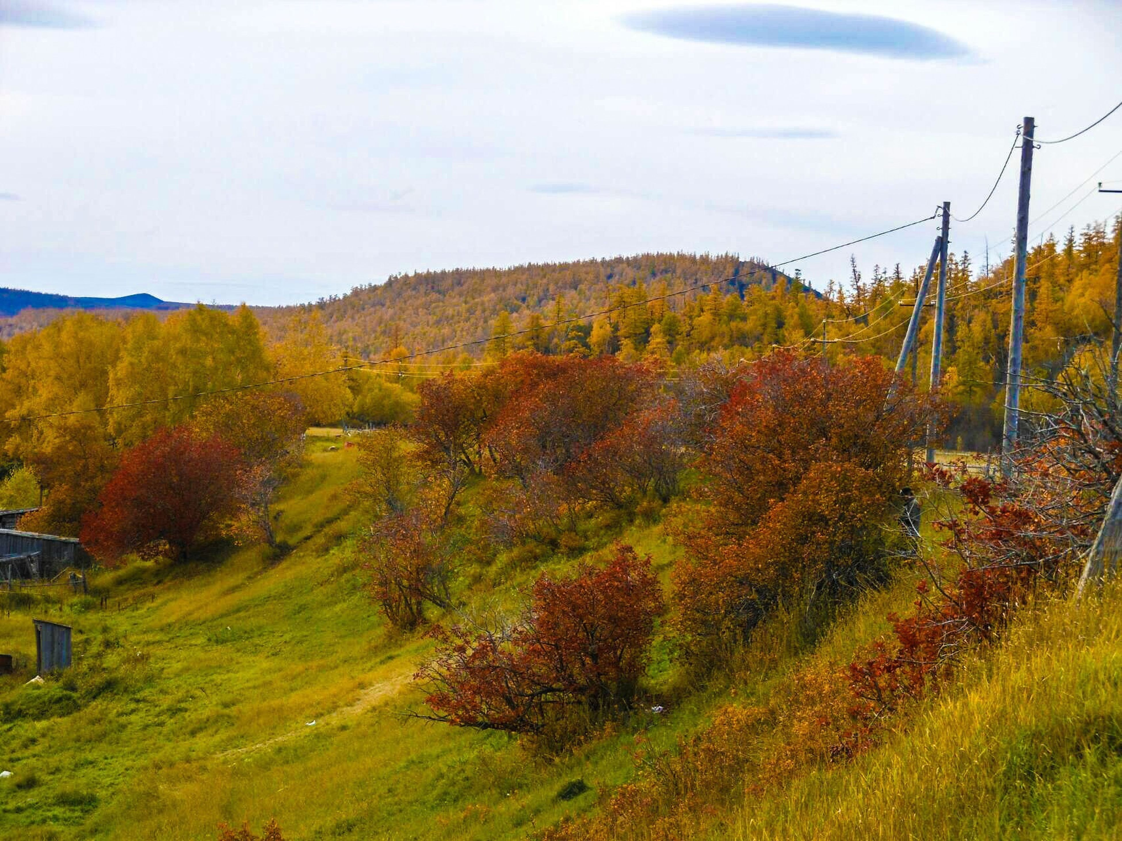 tree, landscape, mountain, tranquility, tranquil scene, autumn, sky, beauty in nature, scenics, grass, nature, growth, field, change, green color, non-urban scene, season, hill, grassy, idyllic