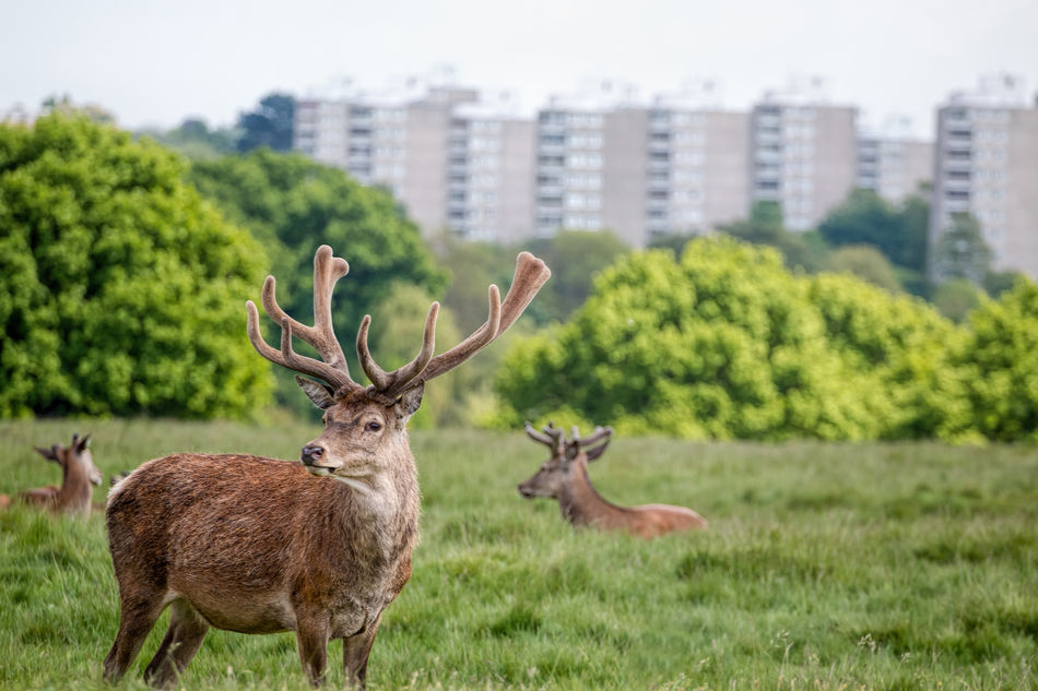 Beautiful stock photos of hirsch, Animal Themes, Animals In The Wild, Day, Deer