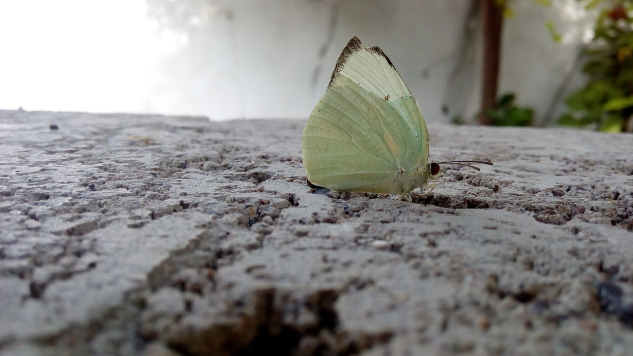 EyeEm Selects Nature No People Day Close-up Outdoors Plant Beauty In Nature Freshness Bricks Surface Level Butterfly - Insect Insect Nature Catopsilia Pomona Lemon Emigrant Butterfly Common Emigrant Butterfly The Week On EyeEm