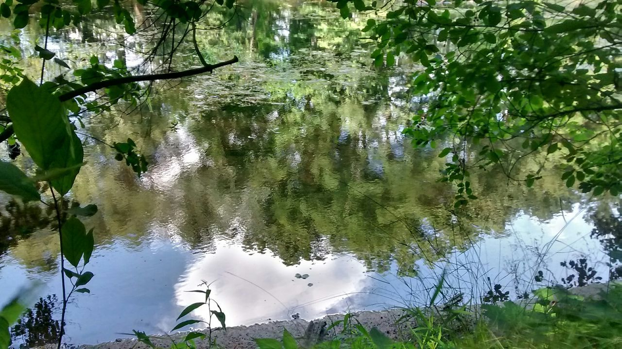 water, reflection, lake, animal themes, nature, tree, growth, white color, plant, day, animals in the wild, no people, waterfront, water bird, outdoors, green color, one animal, swan, beauty in nature, swimming, bird