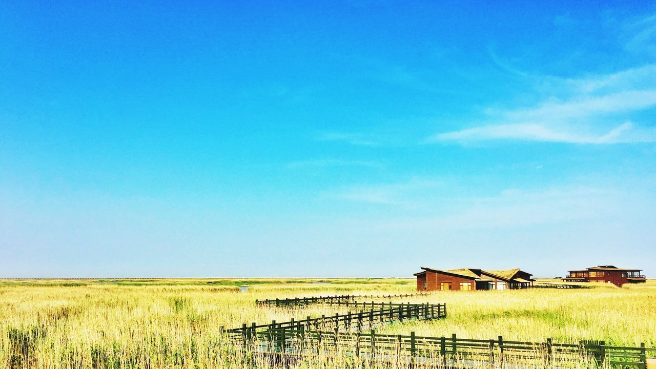 Chongming Dongtan wetland Reeds Sky Nature No People Landscape Tranquility Blue Building Exterior Scenics Beauty In Nature Cloud - Sky By Iphone 6+
