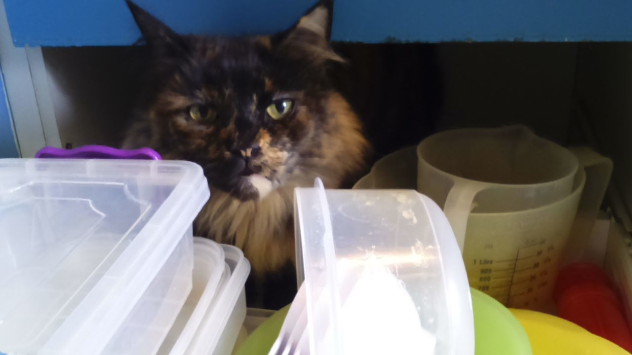 Cat in a drawer Cat Cats My Cat Feline Maine Coon Mainecoon Beautiful Cat Pretty Cat Drawer Kitchen Drawers Kitchenware Cheeky Cat Cats In Random Places Cats In Hiding Hiding Hide And Seek PLASTIC CONTAINER Tortoiseshell Cat Tortoise Shell