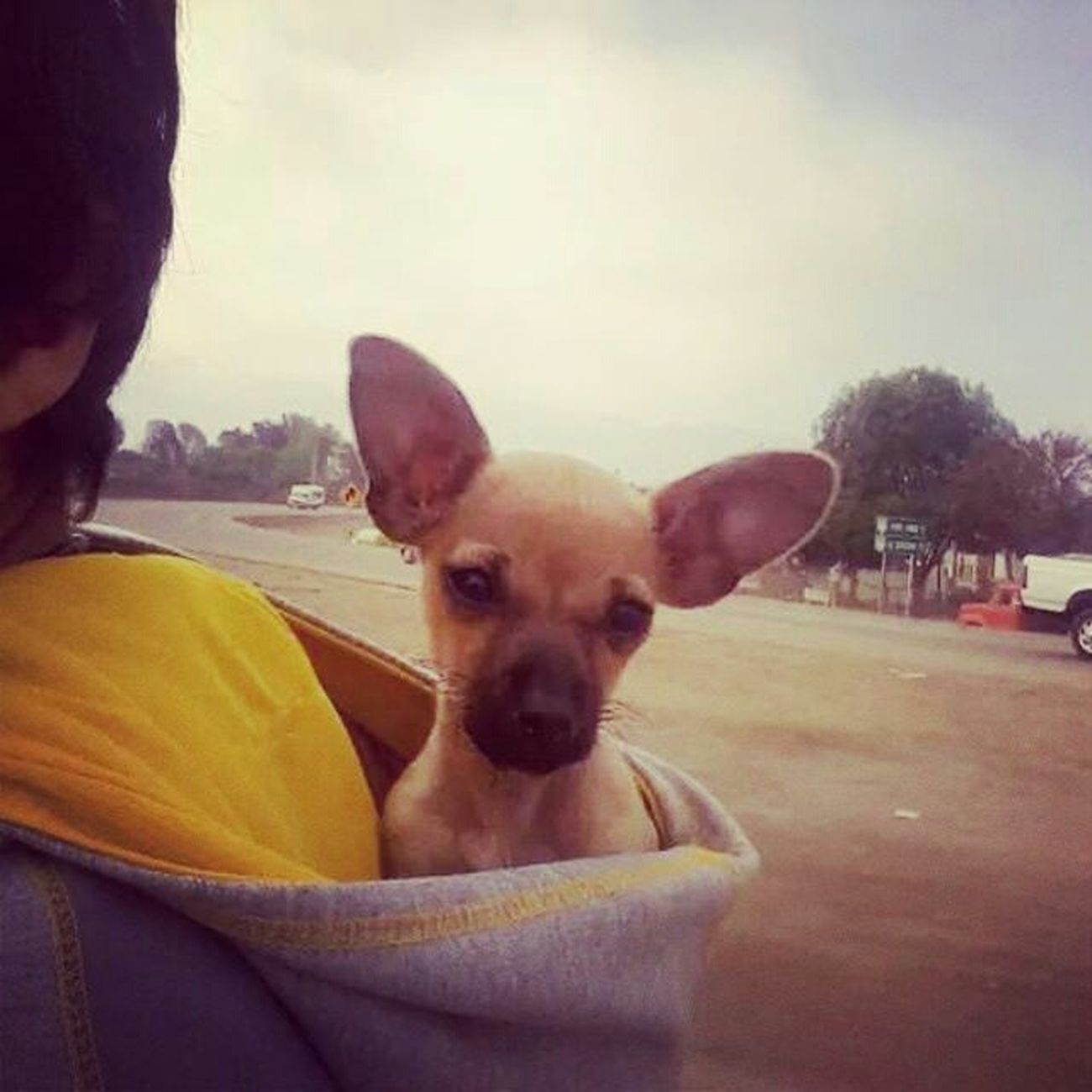 """ La Gollas "" Everyday Joy Old Foto  Traveling I Love My Dog My Old Camara"