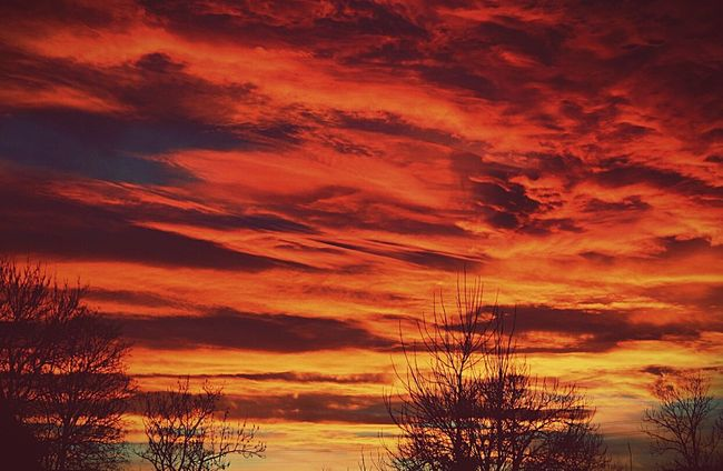 Sunset Tree Beauty In Nature Sky Cloud Majestic Dramatic Sky Atmospheric Mood Nature