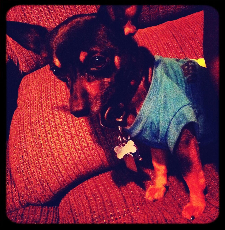 My Dogg (: