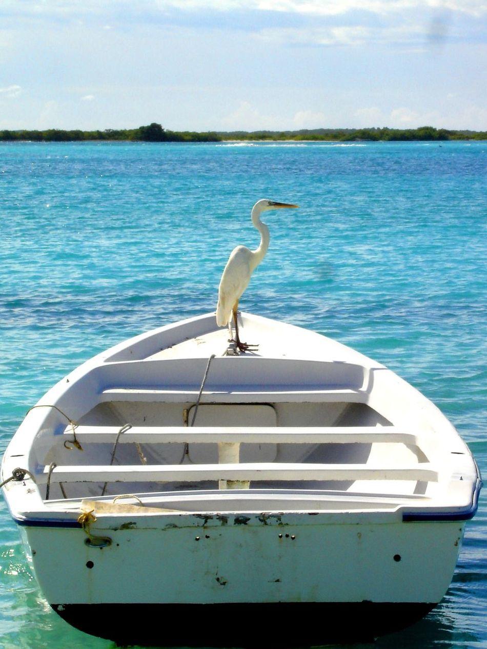Venezuela Los Roques Heron Boat Caribbean