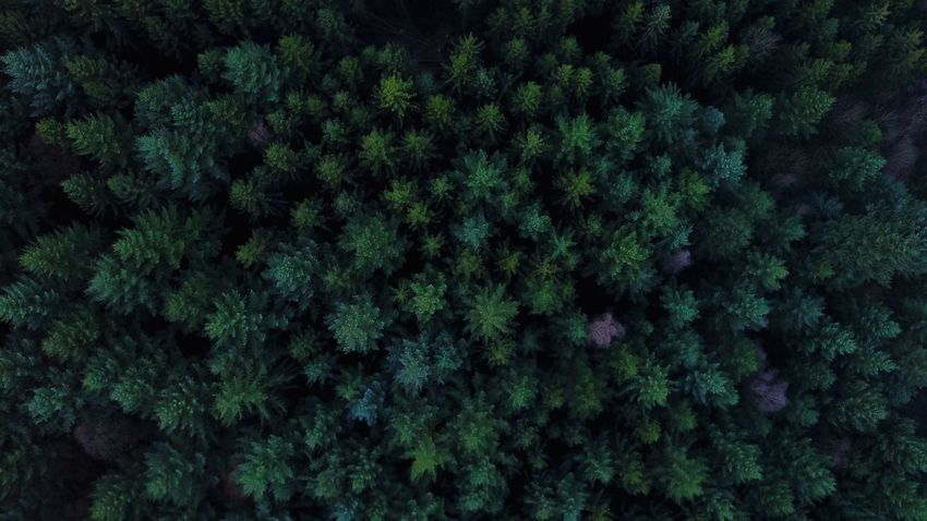 Outdoors Drones Droneshot Dronephotography Drone  Nature Growth Green Color Beauty In Nature Lush Foliage Tree No People Full Frame Backgrounds Forest Day