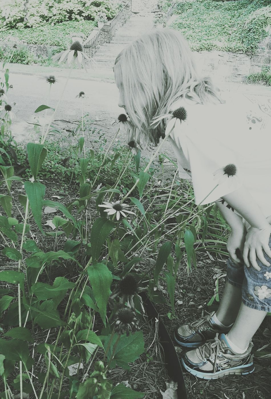 Beautiful Girl in the Echinacea Flowers I Love My Girl  Got The Best Niece Ever