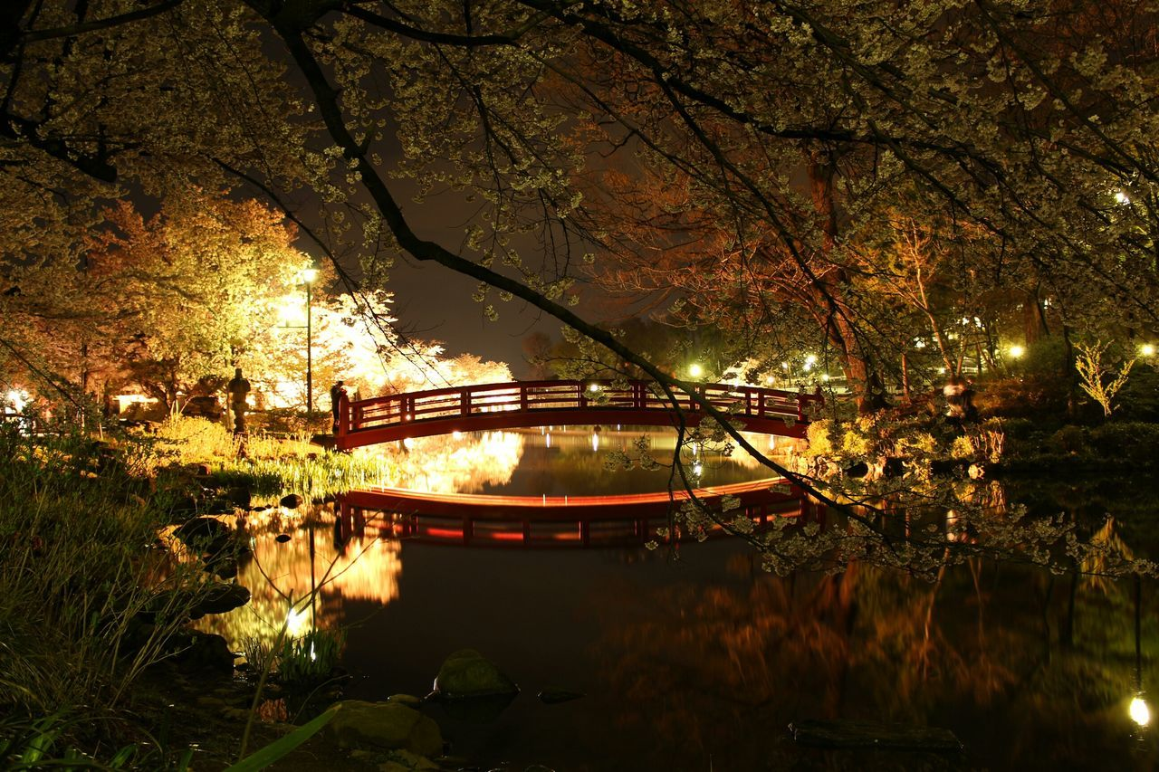 Footbridge Over Lake In Illuminated Park