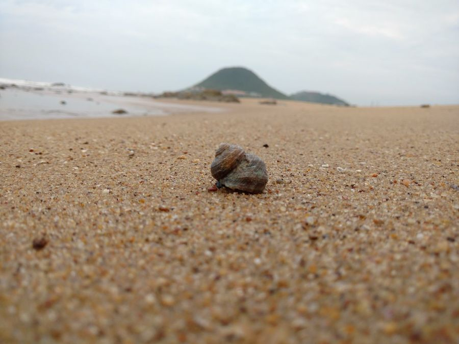 Shell And Hill Shell Shells Shell On The Beach Empty Empty Beach shell photography