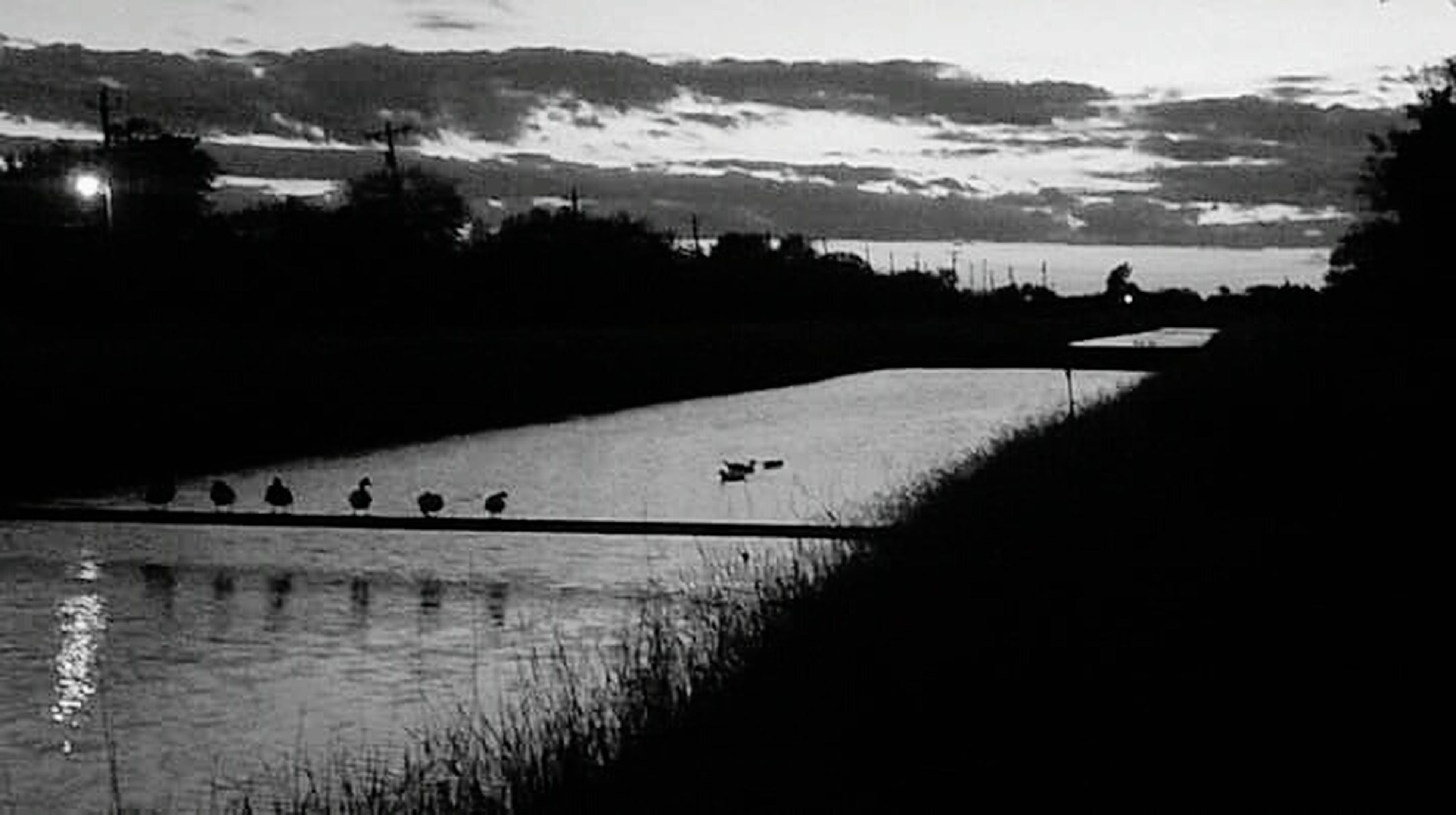 water, bird, animal themes, animals in the wild, wildlife, lake, tranquil scene, reflection, silhouette, tranquility, sky, scenics, nature, tree, beauty in nature, medium group of animals, flock of birds, river, flying