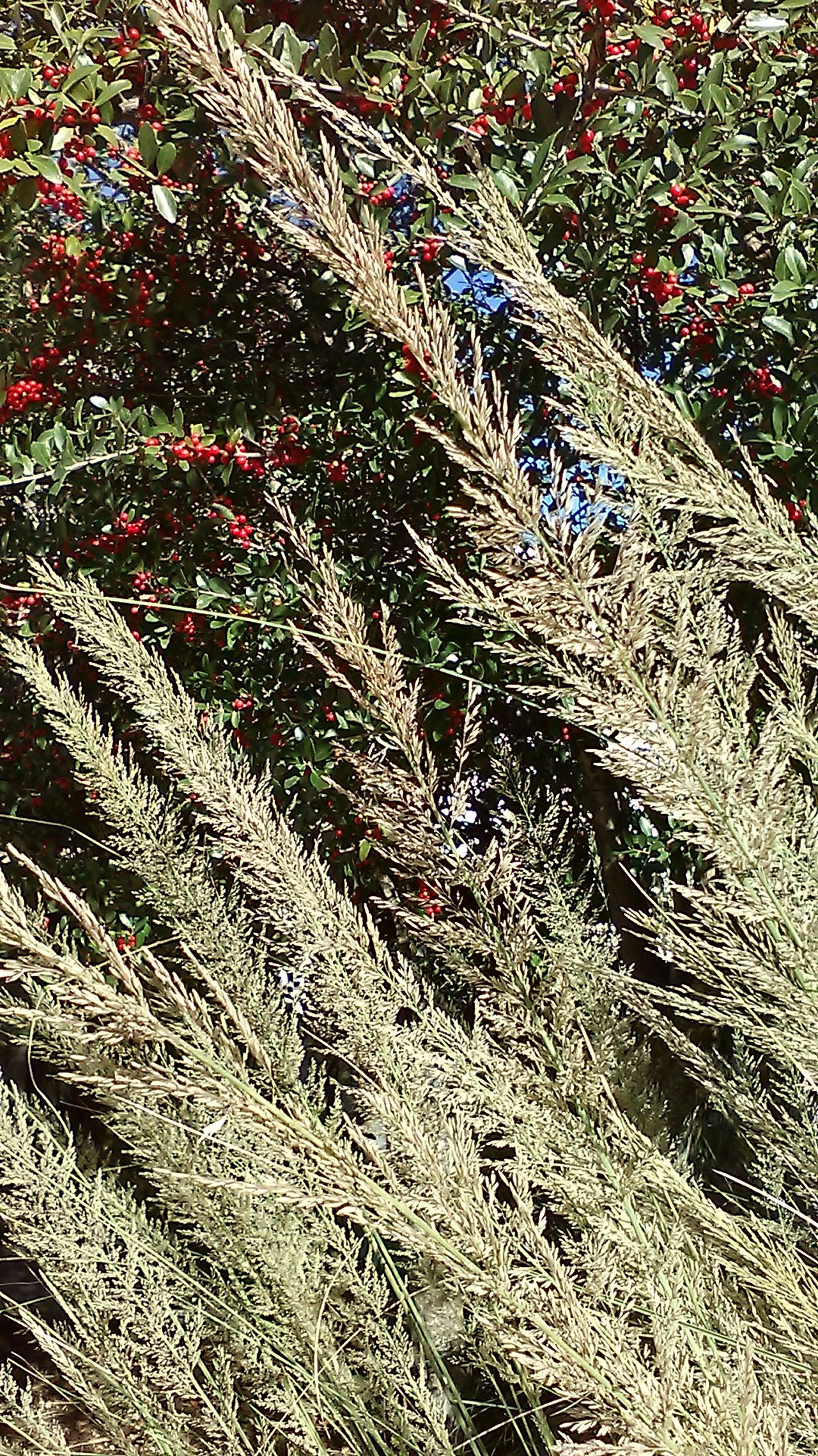 Trees And Bushes Green Leaves Red Berries Feathered Beauty No People Outdoors Hiking Taking Photos Nature Nature Photography Outdoor Photography Nature And Beauty No Edit/no Filter Photography