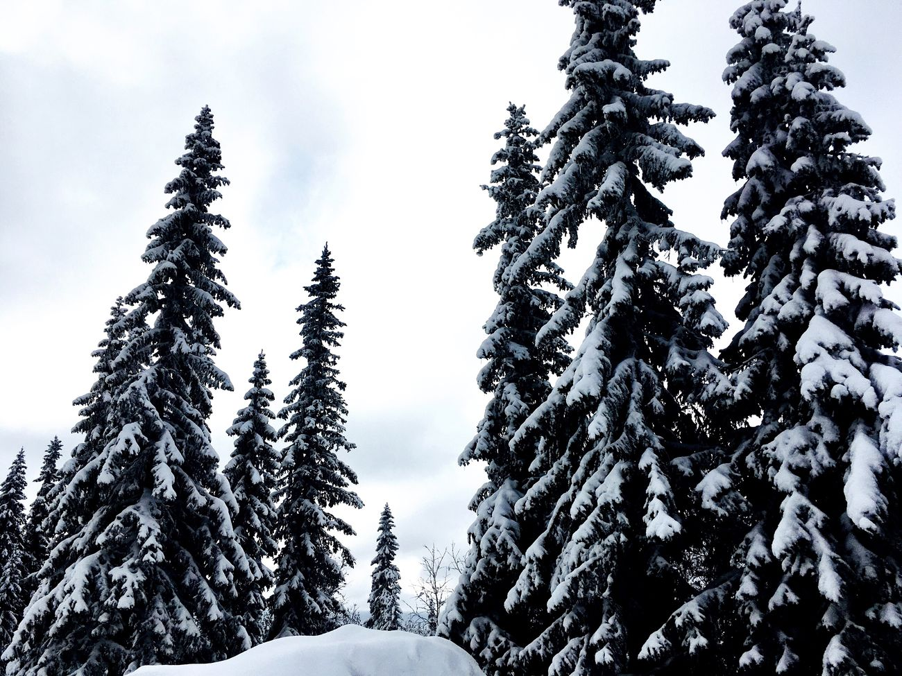 Winter Snow Cold Temperature Tree Nature Weather Beauty In Nature Scenics No People Outdoors Day Sky Christmas Tree Close-up Cold