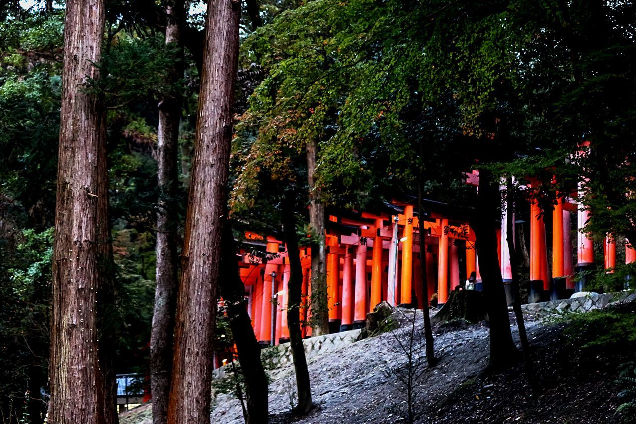 Red Torii Toriiii Mountain Torii Creative Light And Shadow From My Point Of View Japanese Shrine Temple Architecture Japanese Culture Light In The Darkness Japanese Garden Beautiful Architecture Darkness And Light JapaneseStyle Shadows & Lights Dark Portrait Japannes Temple