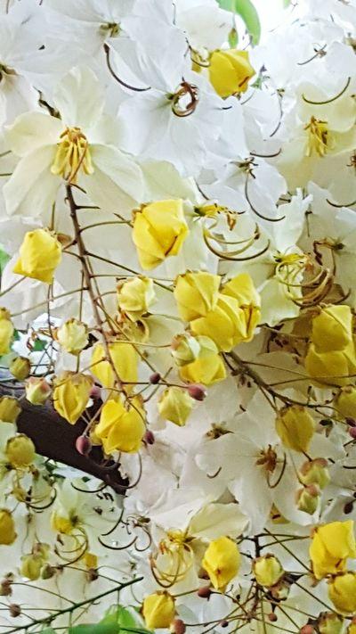 Thai Flowers Thailandtravel ThailandOnly