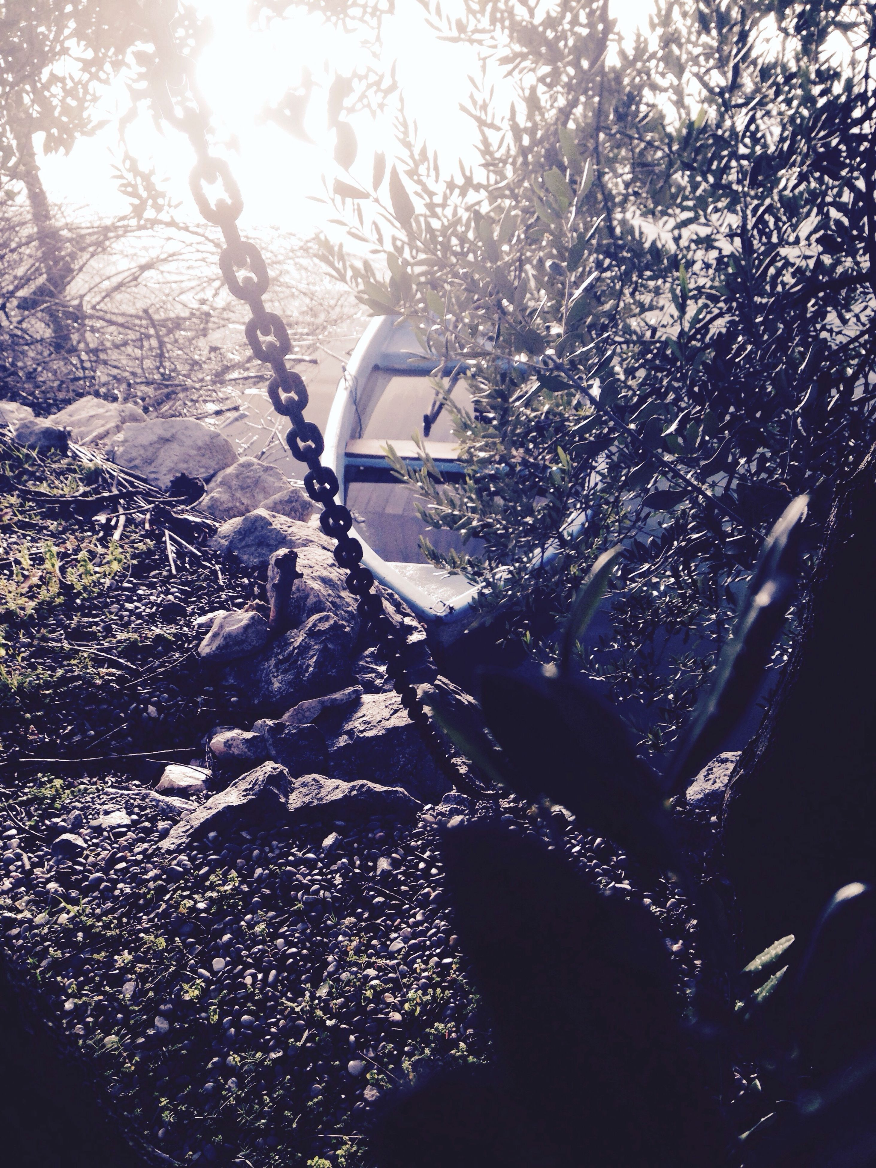 tree, sun, lens flare, sunlight, sunbeam, growth, close-up, nature, plant, car, no people, day, water, outdoors, drop, transportation, wet, focus on foreground, bright, land vehicle
