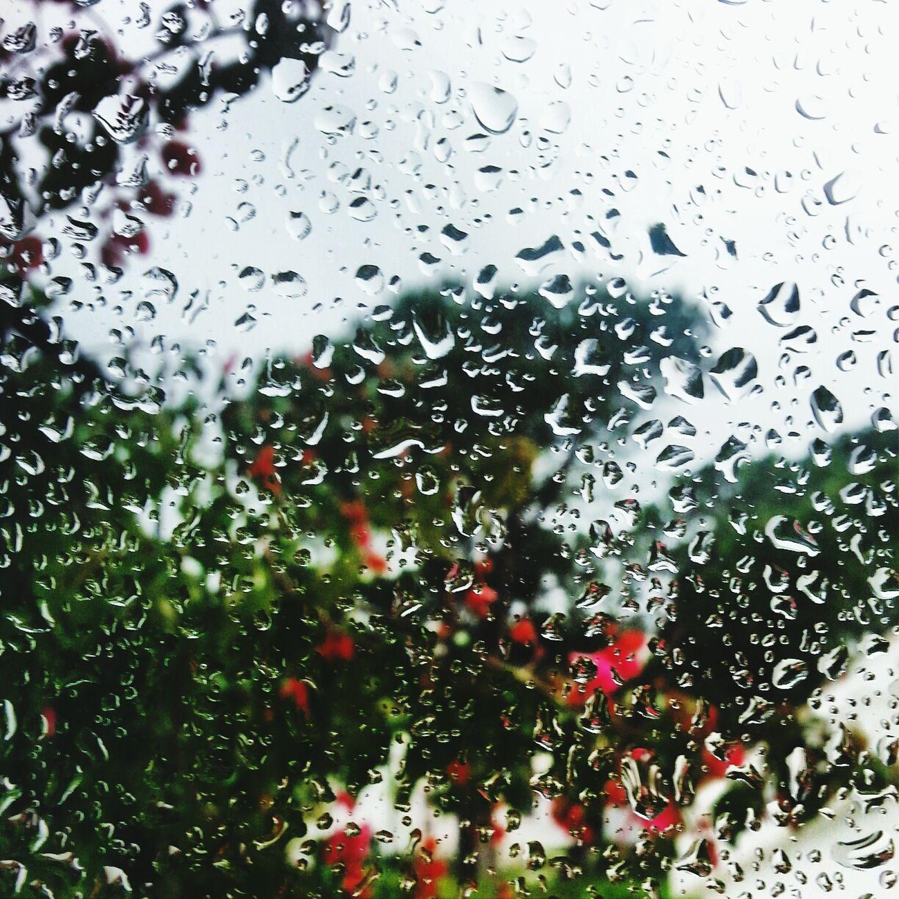 hay recuerdos que no voy a borrar, personas que no voy a olvidar, hay aromas que me quiero llevar, y silencios que prefiero callar. Spring Rain Outside_my_window Relaxing Poetry