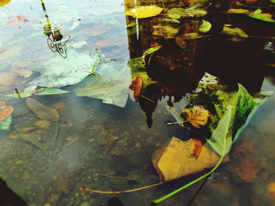 Art Is Everywhere Leaf Reflection Water Autumn High Angle View Nature Floating On Water No People Day Outdoors One Animal Close-up Animal Themes Puddle Fragility Beauty In Nature