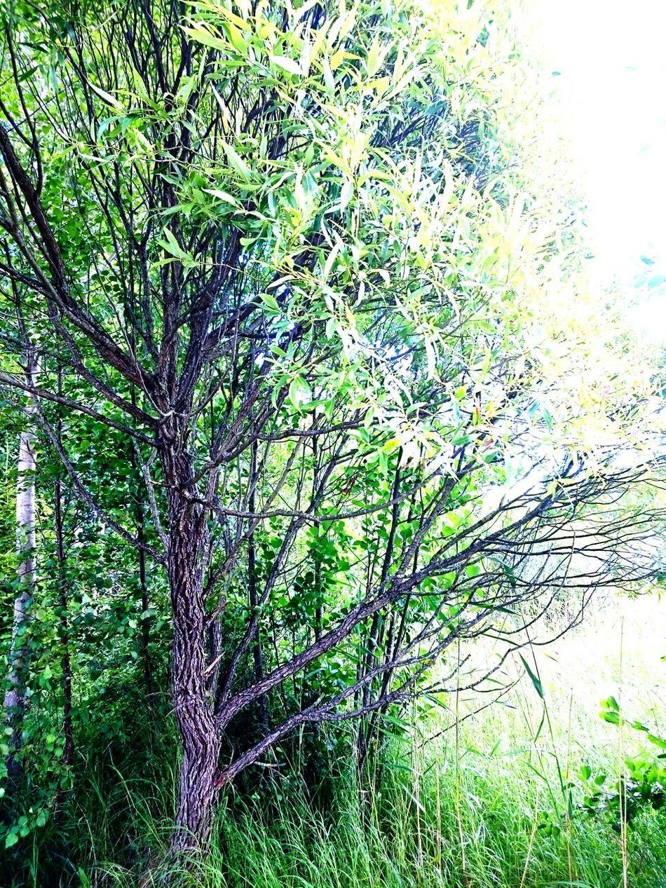 Tree Tree Trunk Nature