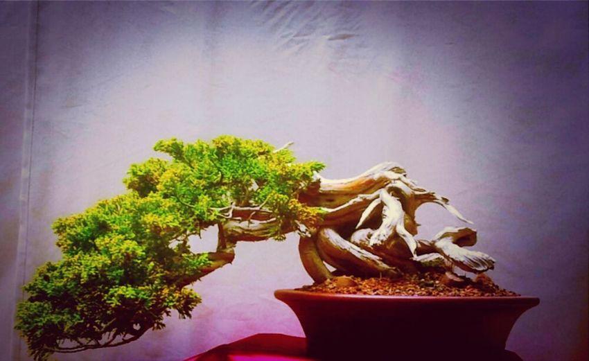 Mini Nature