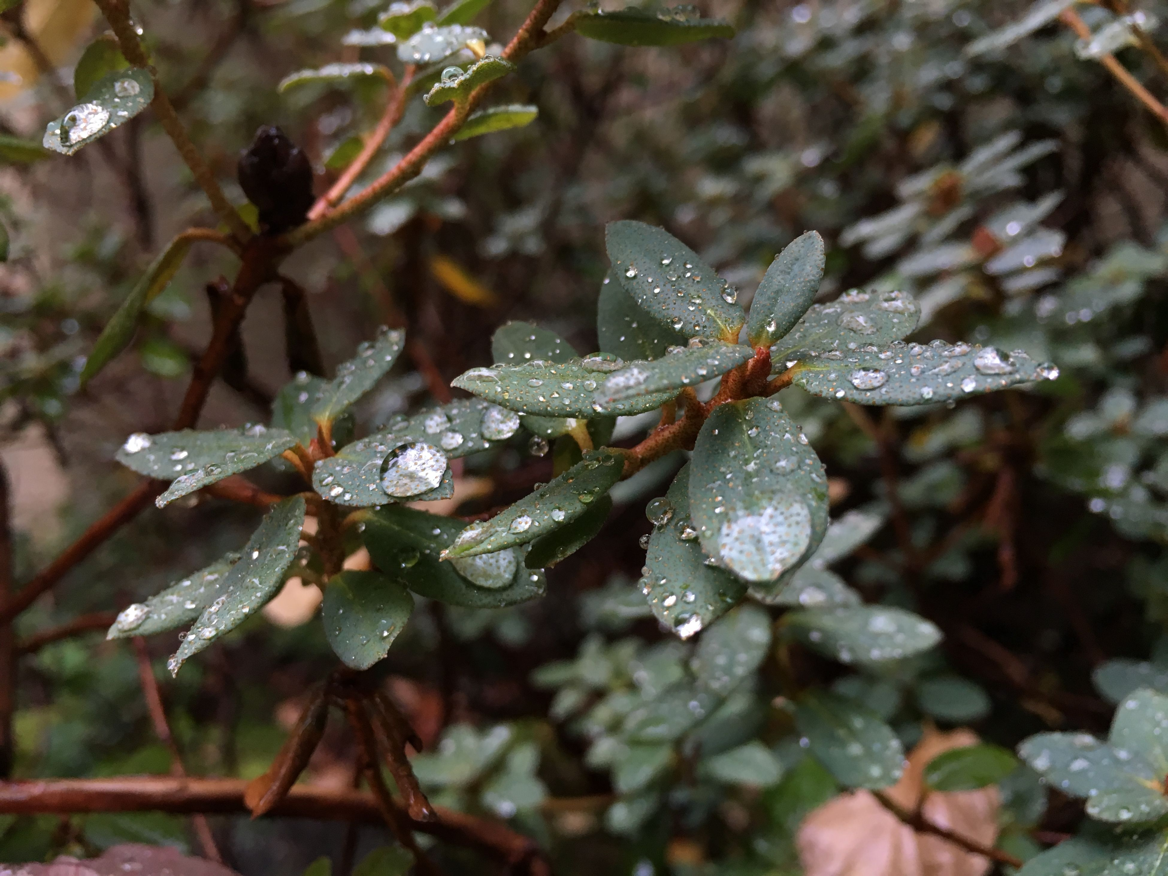 drop, wet, water, weather, close-up, cold temperature, winter, season, nature, snow, growth, dew, focus on foreground, frozen, leaf, raindrop, rain, freshness, plant, fragility