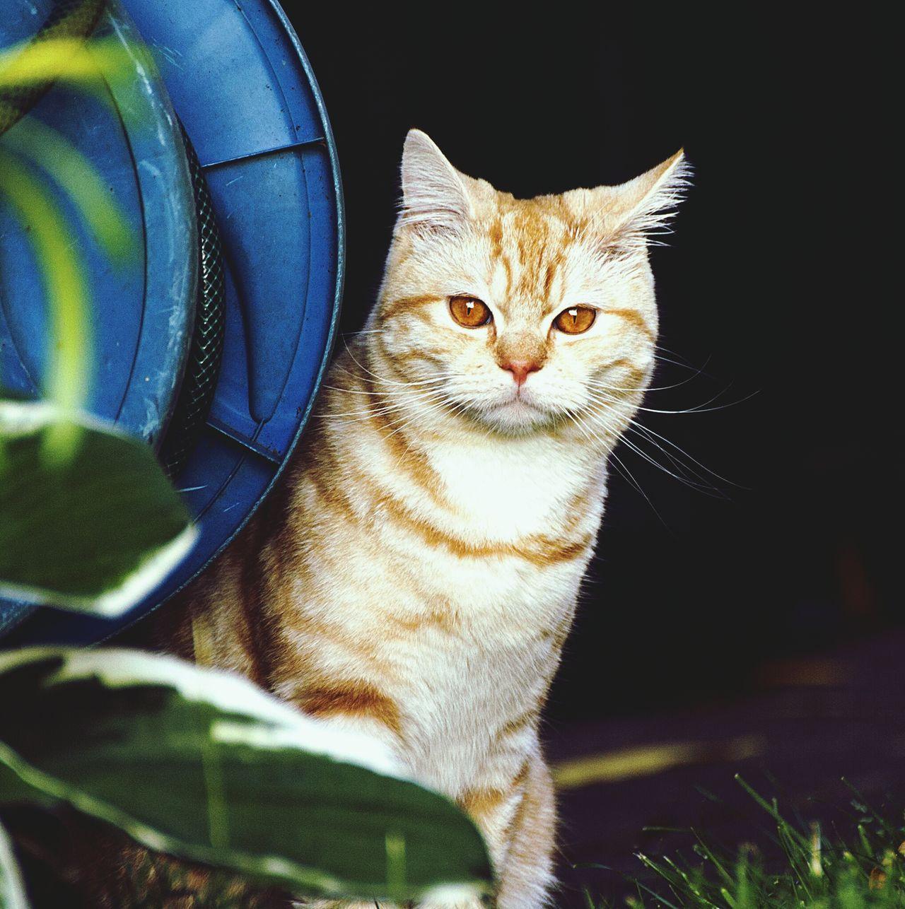 Beautiful stock photos of kitty, Alertness, Animal Eye, Animal Head, Animal Themes
