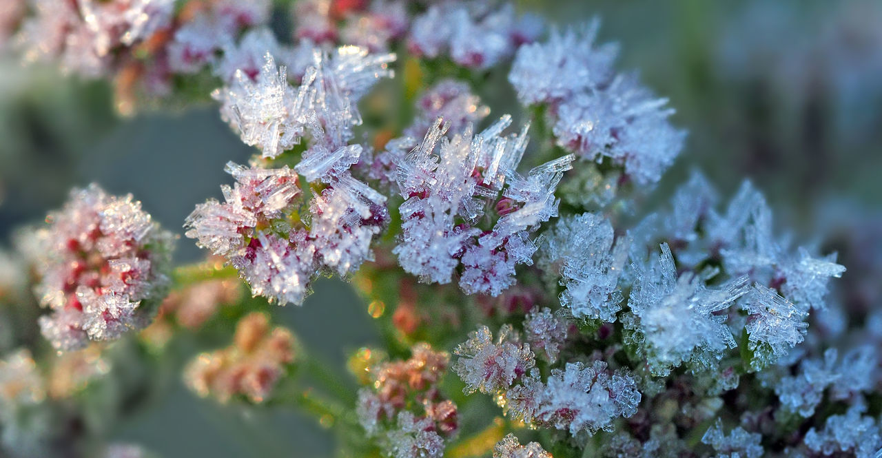 Icy splendor / Eisige Pracht Beauty In Nature Best Shots Nature Close-up Cold Temperature Day Eiskristalle Flower Fragility Freshness Frosty Ice Ice Crystals On Plants Kristalle Macro Nature No People Outdoors Plant Snow ❄ Winter