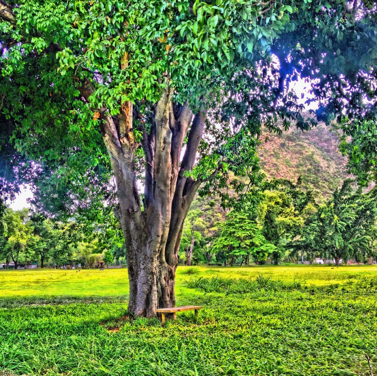 tree, growth, nature, grass, green color, tree trunk, plant, landscape, branch, tranquility, no people, beauty in nature, outdoors, day