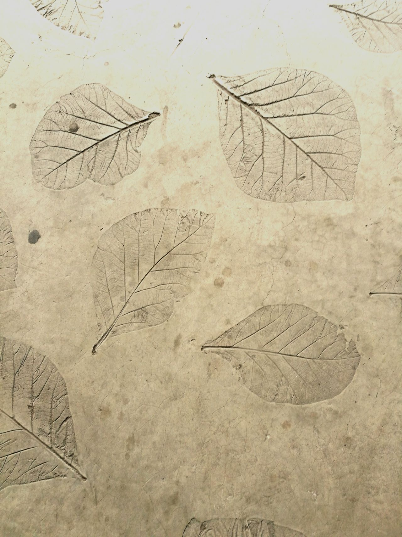 Leaves stamp on concrete floor Pattern Close-up Leaves Leaf Stamp Concrete Floor Concrete Texture Nature Floor Flooring Grey