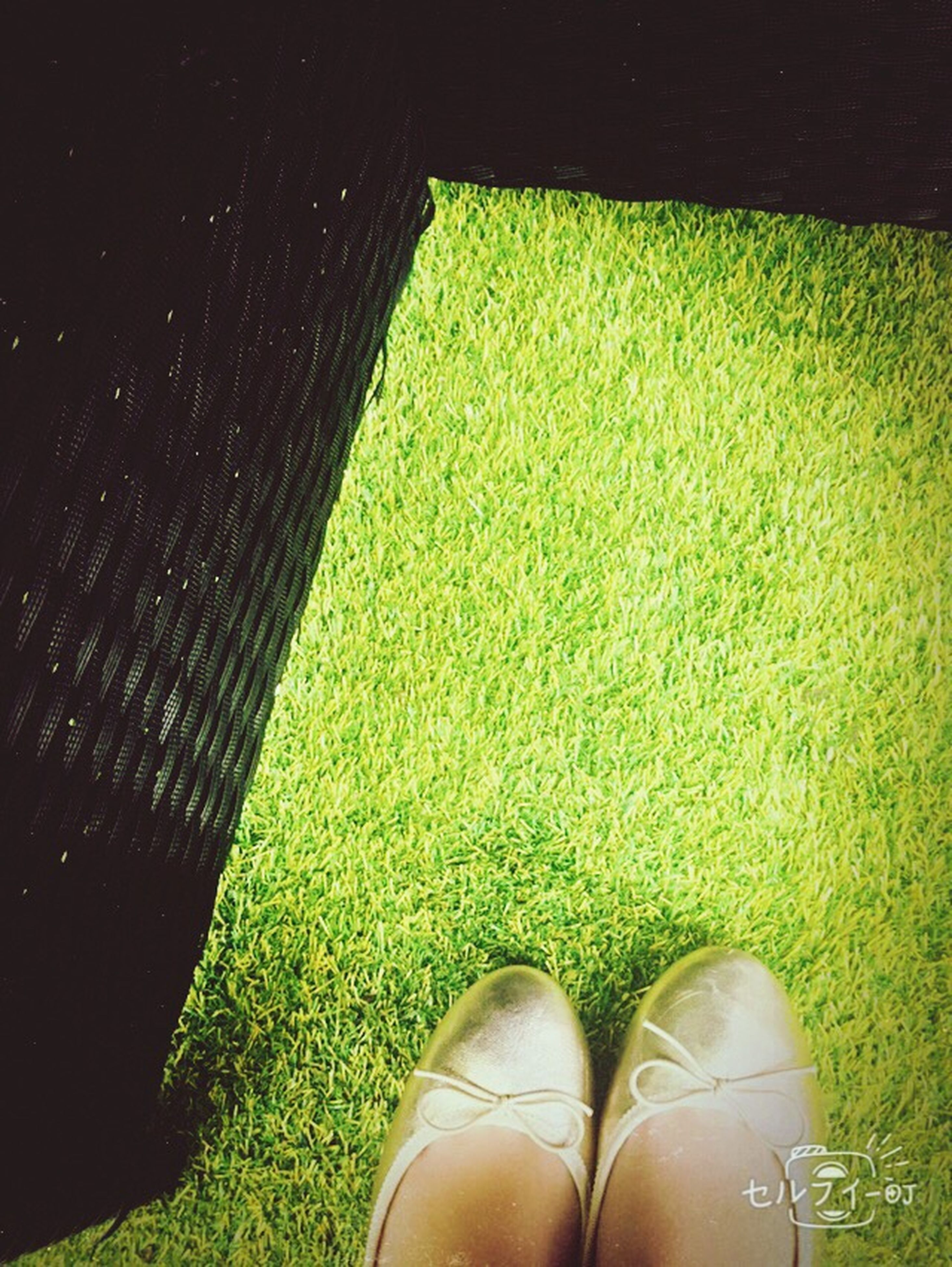 low section, shoe, grass, person, personal perspective, footwear, green color, grassy, high angle view, field, one person, part of, human foot, close-up, pair, outdoors, day, canvas shoe, standing