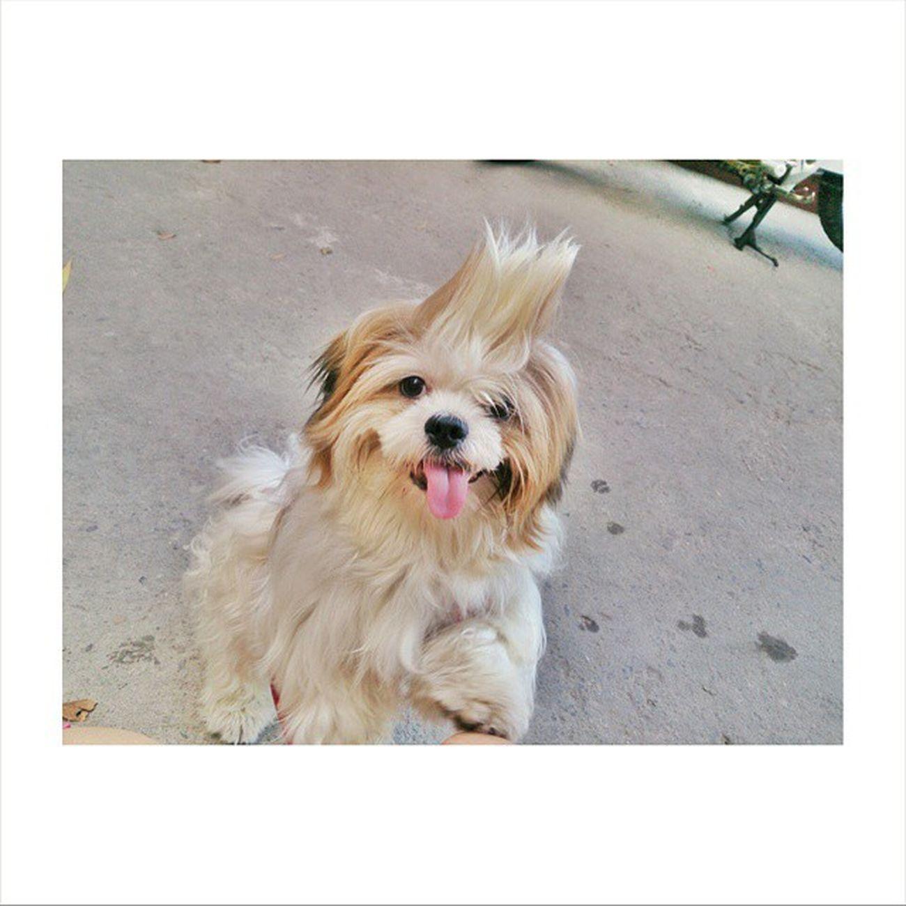 Kahit anung mangyari, you'll always be my baby. Kahit na may dumating na bagong puppy, kahit na chow chow pa sya. 😊 My KobeBebe 🐶. My Furball 🐕. My Firstbaby 😍 My LivingTeddyBear
