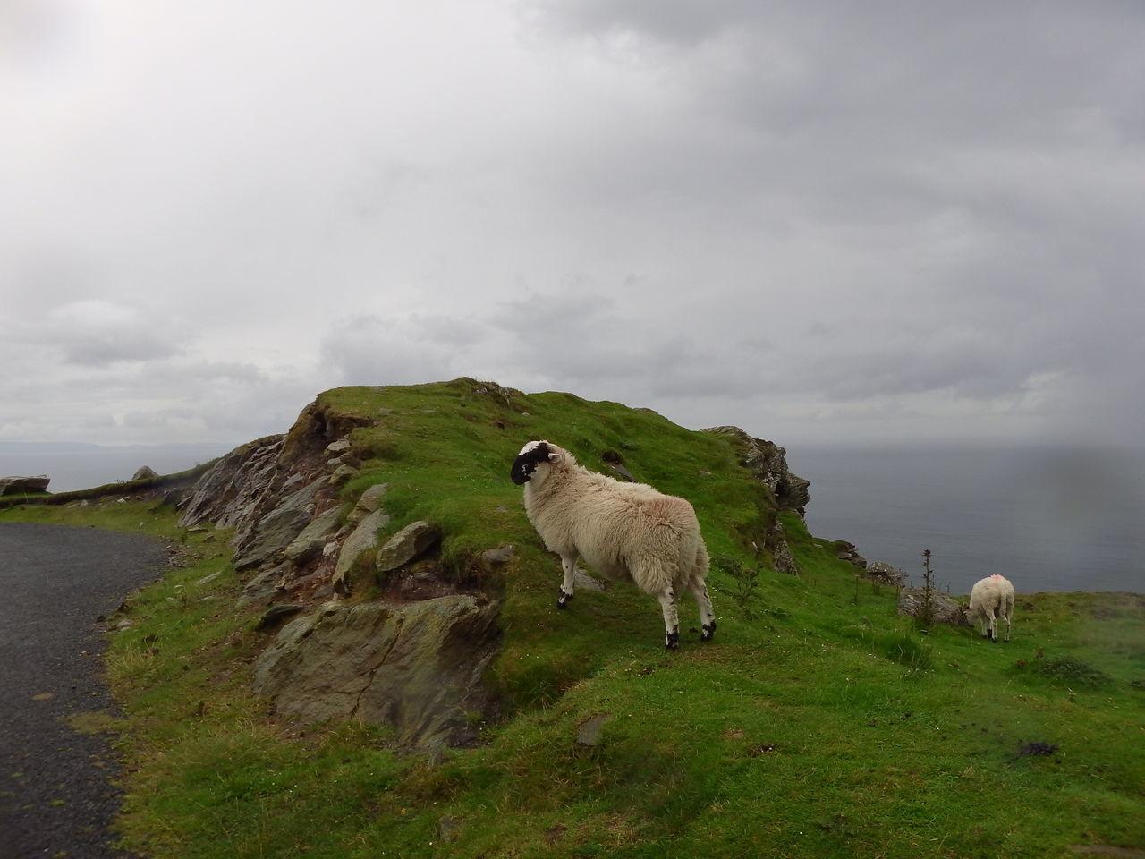 Beautiful stock photos of ireland, Animal Themes, Cloud - Sky, Cloudy, Day