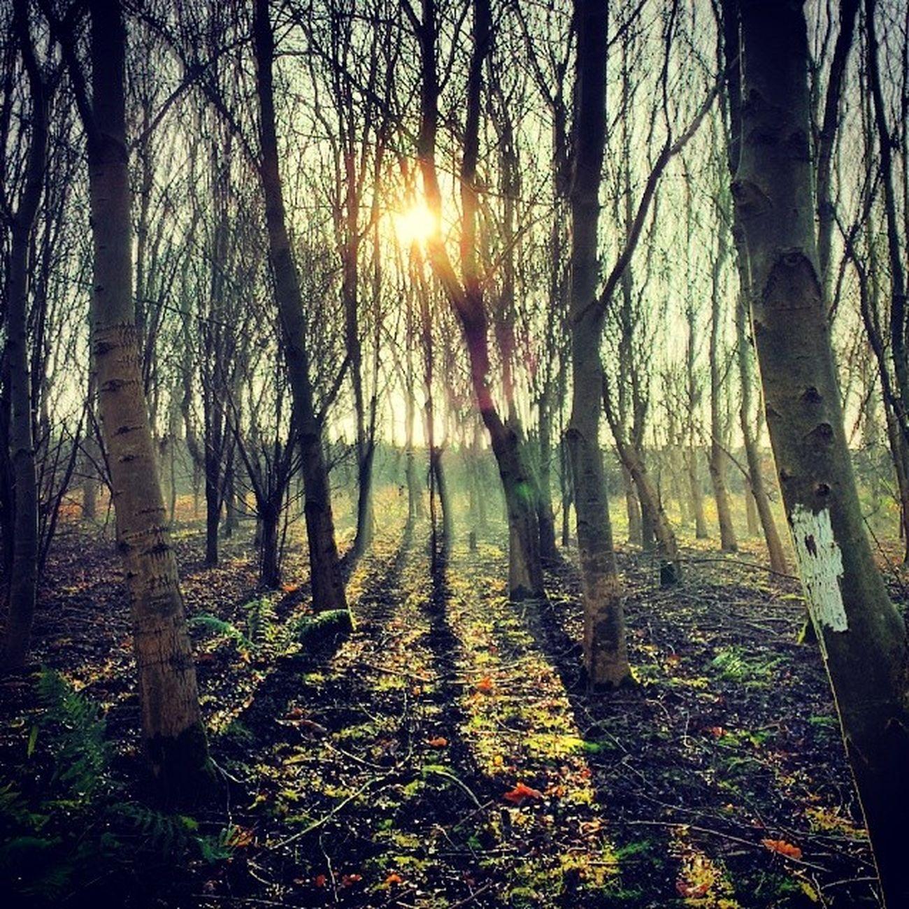 Tree_captures