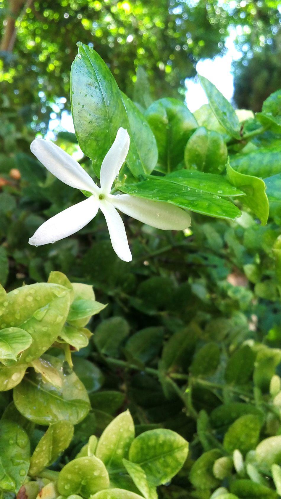 Nature Flower Garden Watering Plants