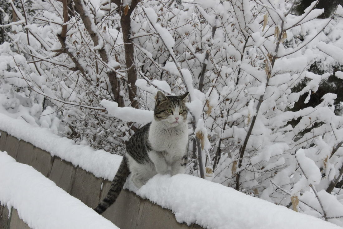 Animal Themes Branch Cold Temperature Day Domestic Animals Domestic Cat Feline Mammal Nature No People One Animal Outdoors Pets Portrait Snow Snowing Tree Winter