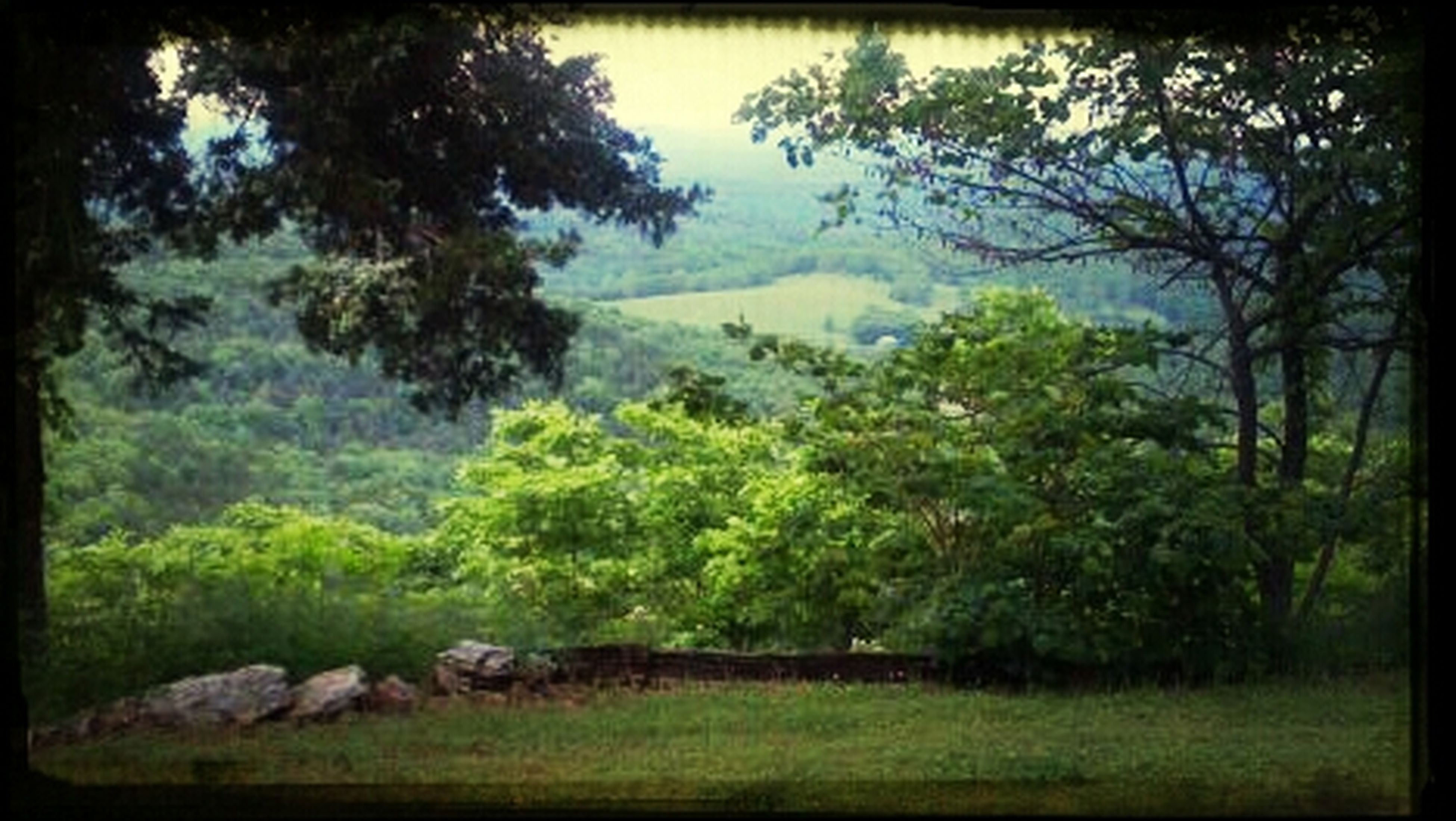 Beautiful view from the cabin we rented at the Eagles Lodge in Eureka Springs AR.