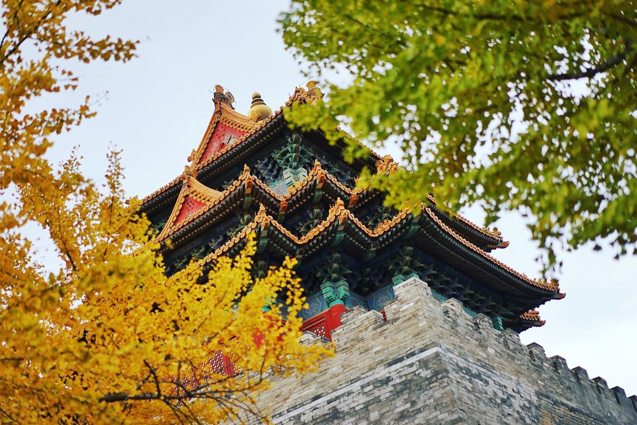 Architecture Auntumn Autumn Colors Autumn Leaves Beauty China Cultures Forbidden City History Ornate Place Of Worship Tradition Travel Destinations Tree