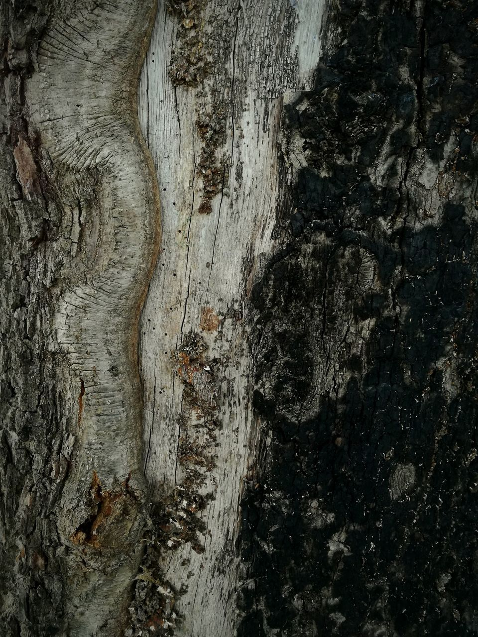 textured, tree trunk, tree, rough, weathered, full frame, backgrounds, bark, close-up, no people, knotted wood, built structure, nature, day, outdoors