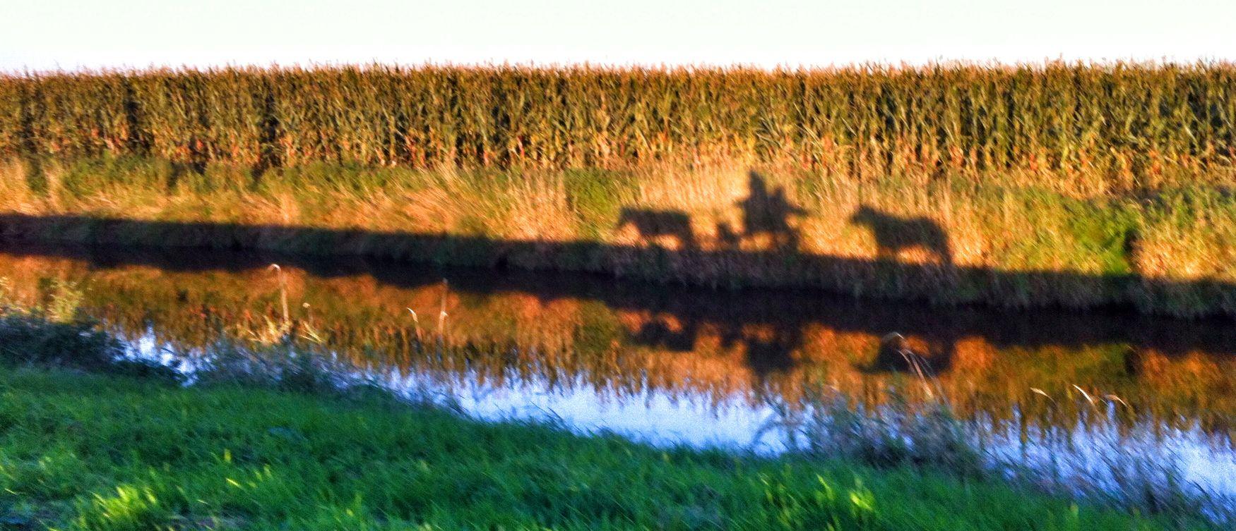 Kutschfahrt mit Reservepony. Ostfriesland Arte.fakt Backemoor Pferdekutsche Kutsche Kutschfahrt