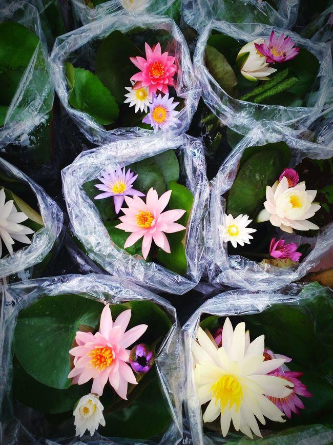 Lotus Orchids Market Flotemarket Bangkok Thailand. Life Is Journey????