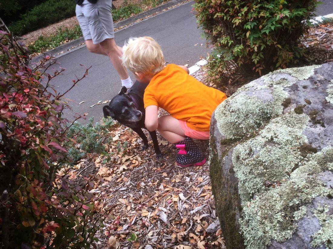 Cute Autumn Play Little Blond Girl Childhood Outdoors Nature Dog Playful Casual Blond Hair Facing Away Little Black Dog This Week On Eyeem Kids Fallen Leaves Rocks Found On The Roll in Sonoma County CA Santa Rosa
