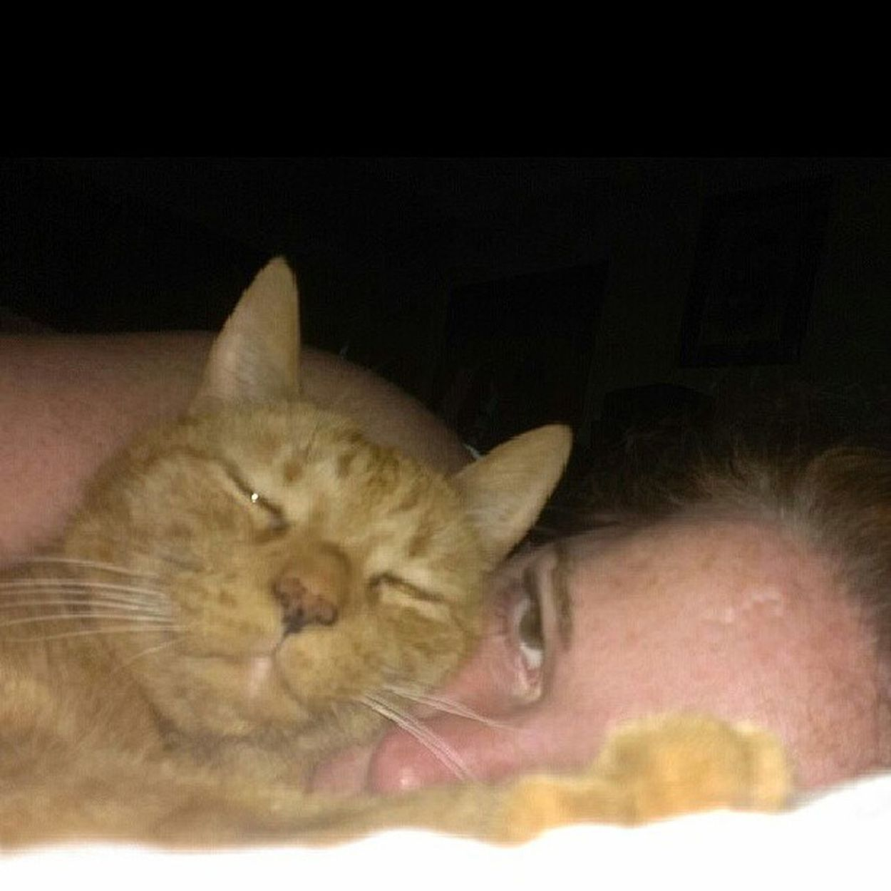 Please ignore my sleepy human face. Look at the adorable cat face. Max Bubby Bigorangetabby Cuddlyboy catsofinstagram catsagram